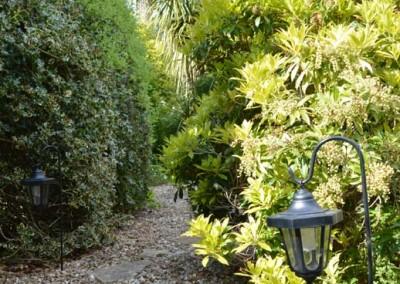 Mature shrubs in the back garden