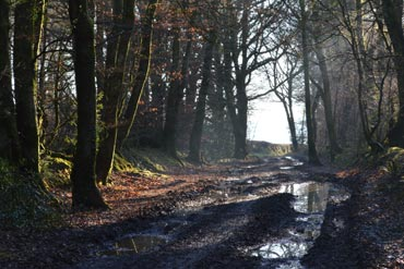 Photo: A muddy walk on Fire Beacon Hill