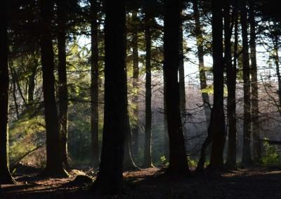 Fire Beacon Hill woods