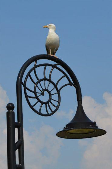 Photo: Lyme Regis ammonite inspired lamp post