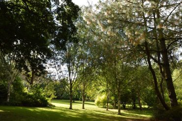 Photo: Sunlight through the trees at Burrow Farm Gardens