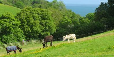 Photo: the Sidmouth Donkey sanctuary