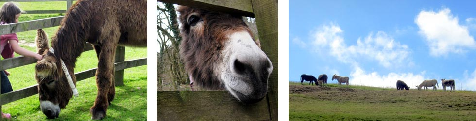 Photos: Sidmouth Donkey Sanctuary