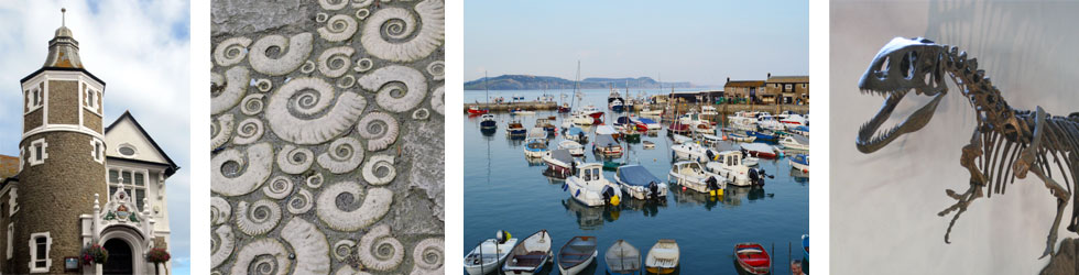 Photos: Lyme Regis harbour and fossils