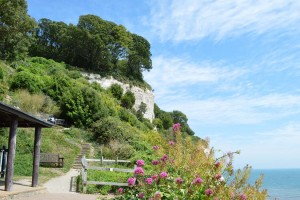 Photo: The cliff side gardens at Beer