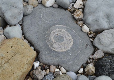 An ammonite on the beach at Lyme Regis