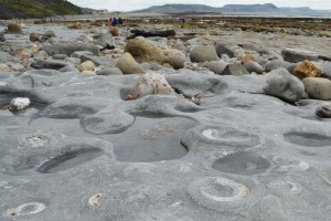 Photo: The Ammonite pavement on Monmouth Beach, Lyme Regis