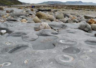 The Ammonite pavement on Monmouth Beach, Lyme Regis