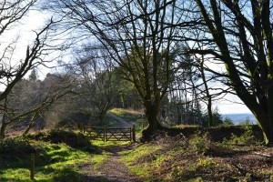 Photo: Footpaths across Mutters Moor, Sidmouth