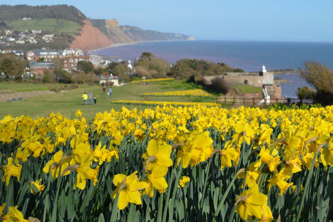 Photo: Daffodils on Peak Hill