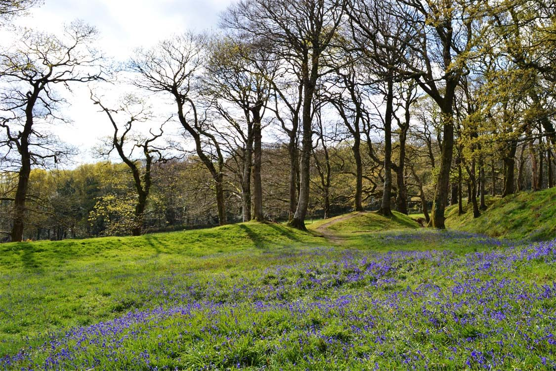 Photo: Bluebells at Blackbury Camp