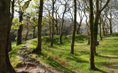 An enchanting woodland walk with echoes from the Iron Age