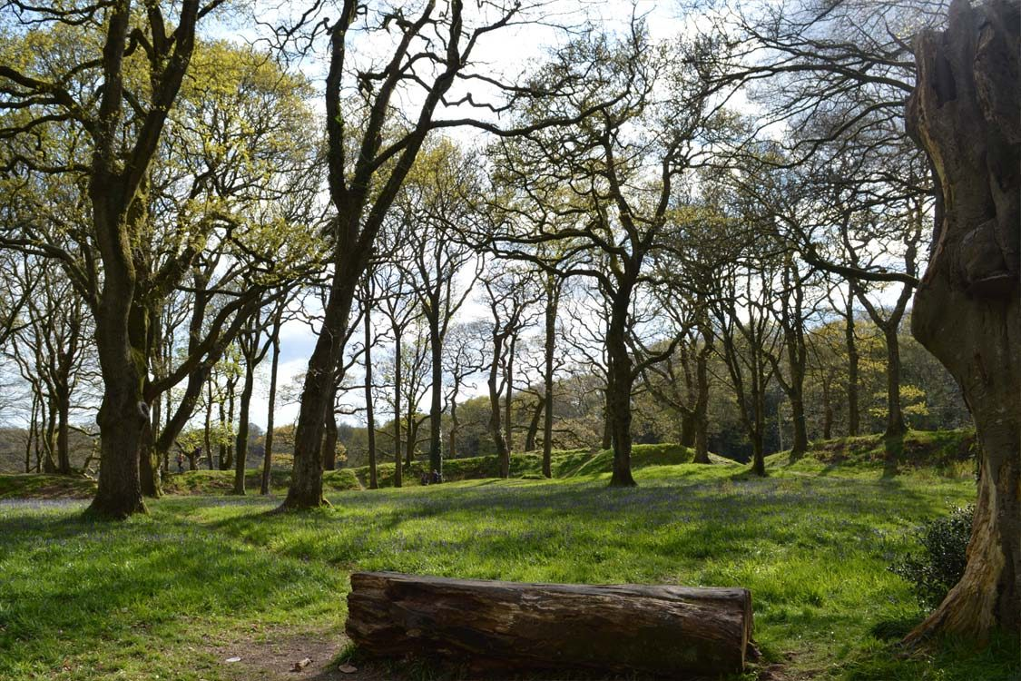 Photo: Blackbury Camp Iron Age earthworks