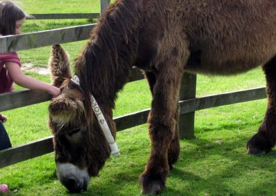 Photo: The donkeys love being stroked