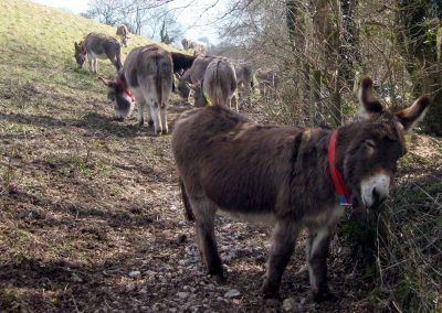 Photo: Some of the 500 or more donkeys that live at the sanctuary