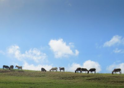 Photo: Donkeys grazing