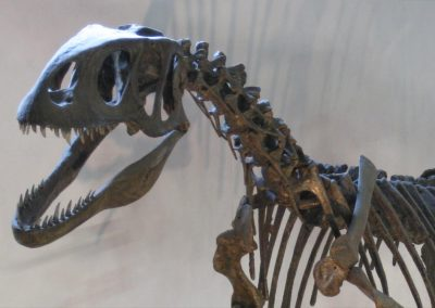 A reconstructed skeleton in Dinosaurland