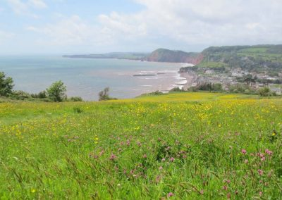 Views over Sidmouth from the coast path