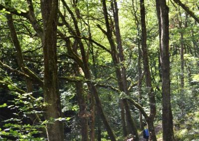 On the Teign Gorge trail