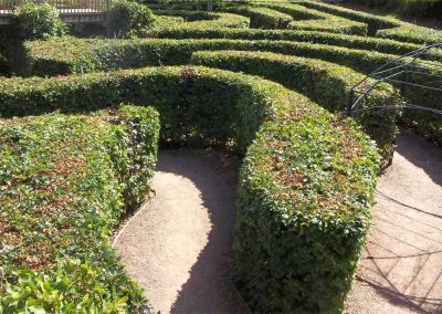 Photo: The beech hedge maze